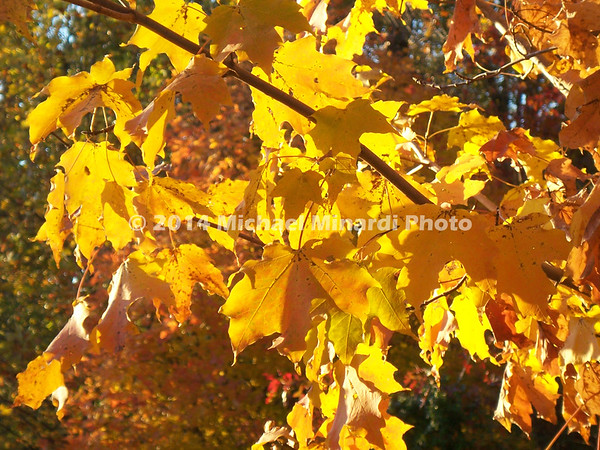 Yellow and Orange leaves on branch