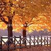 Beautiful Fall path in Rockville, MD img015