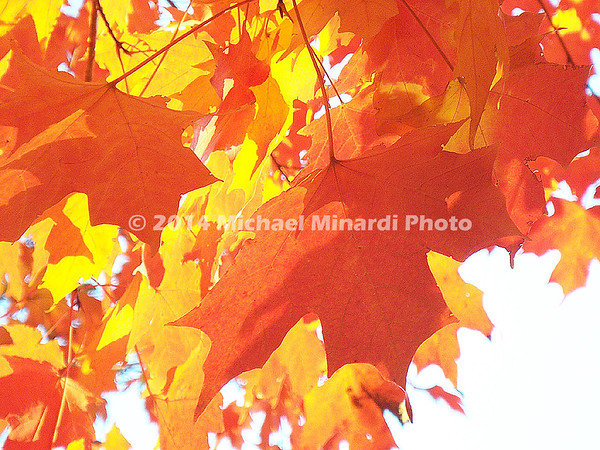 Orange & Yellow Fall leaves  img059