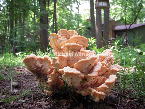 Fungus  imgDSCN1121