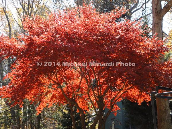 Fall in  Washington D C 2010 038