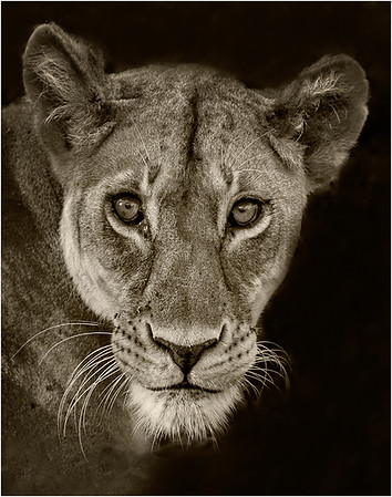 5. Queen of the Jungle - Harvey Augenbraun