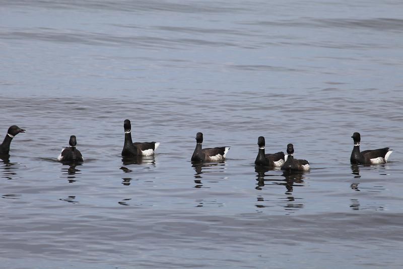 Brants -   Edmonds Marine Park, WA