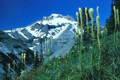 Zig Zag Canyon, Mt Hood or0797_k8nr