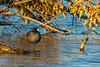 Lake Manawa<br /> November 12, 2017