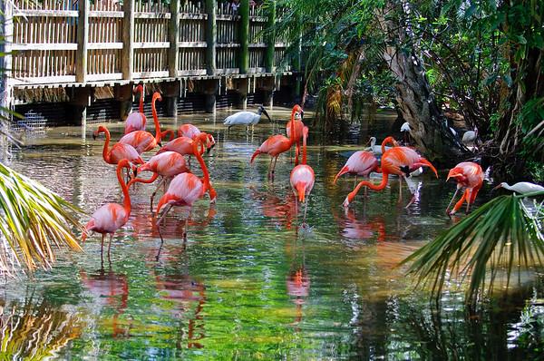 Pool at Palm Beach Zoo