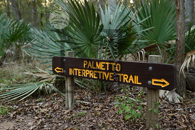 Palmetto-1619