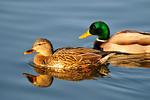 A pair swimming. D3X8645