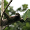 sloth_relaxing_1