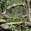 Rainforest branches