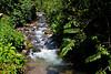 Rio Guayabo at Canopy Lodge, El Valle de Antón, Coclé Province, Panama