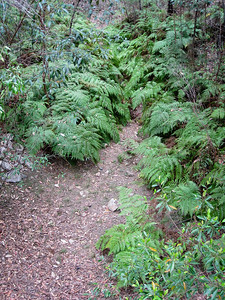 Banksia Track - Raven Street Reserve - Raven St Reserve & Milne Hill Reserve; West Chermside, Brisbane, Queensland, Australia; 03 October 2012. Photos by Des Thureson
