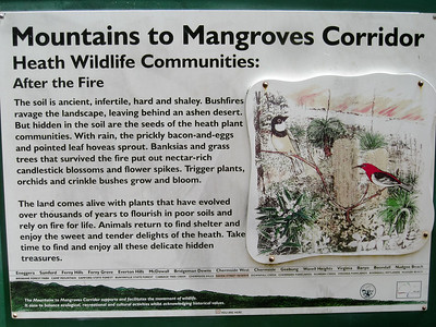 Mountains to Mangroves Corridor - Information - Raven Street Reserve - Raven St Reserve & Milne Hill Reserve; West Chermside, Brisbane, Queensland, Australia; 03 October 2012. Photos by Des Thureson