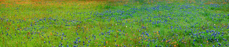 Texas wildflowers, Washington County