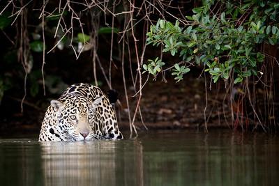 Pantanal 2011