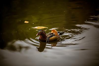 Da Duck