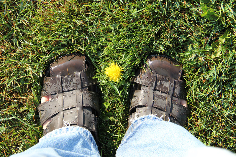 Dandelion Flower Between Two Feet