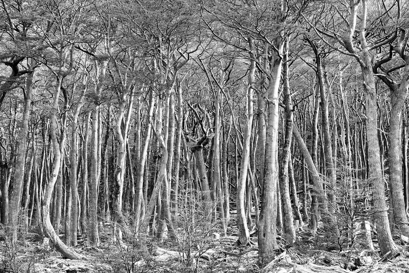 A forest at the door of the glacier in Ushuaia, Argentina