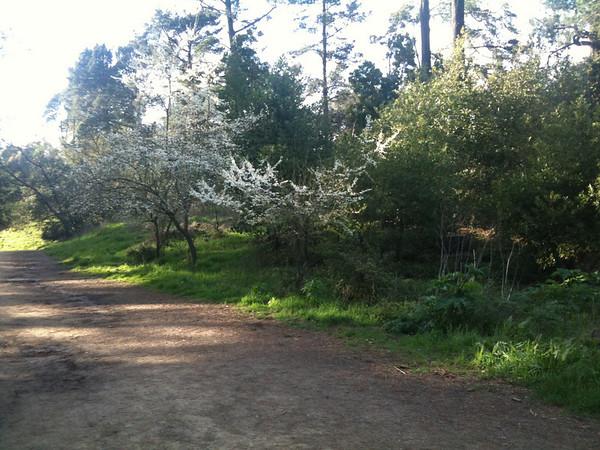 Redwood Spring 2010