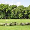 Magnolia Plantation S. C.