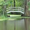 Magnolia Gardens S. C.