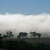Coastal Fog is more common in June and July