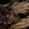 Kelp Whip