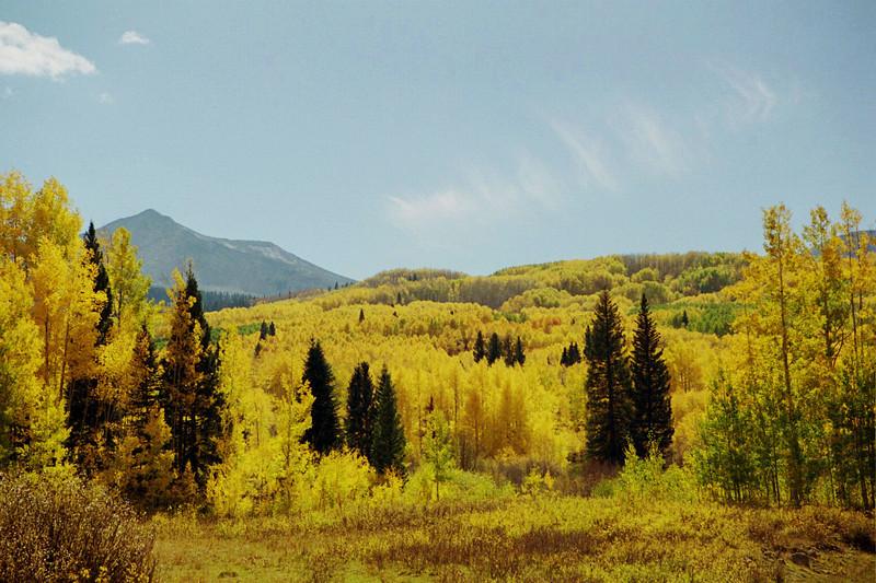 Aspen Hillside Fall colors