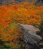 Fall colors near Stone Face Vermont