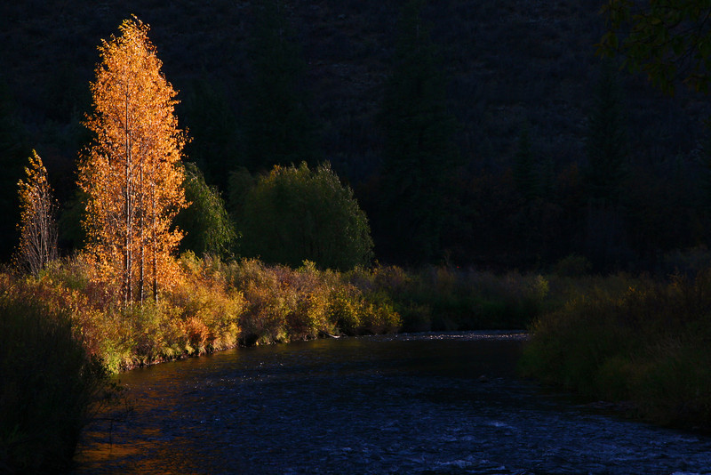Fall colors along the Frying Pan River Colorado