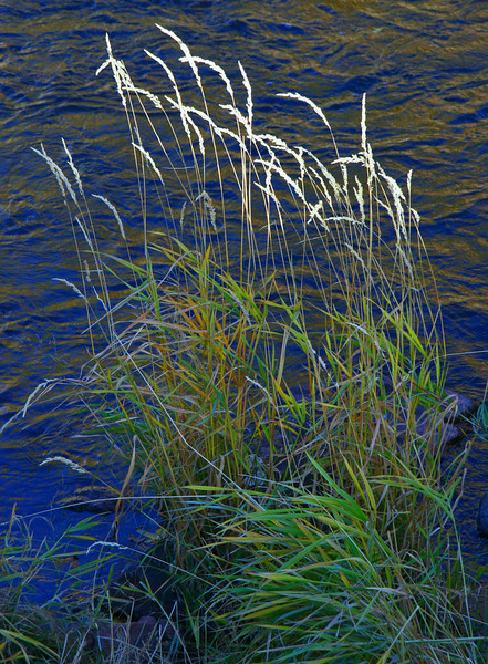 Fall colors make the grasses blow white