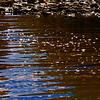 River sparkels