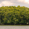 Good mangroves