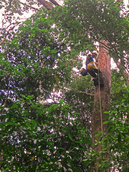 He used climbing gear to ascend the larger trees in the forest