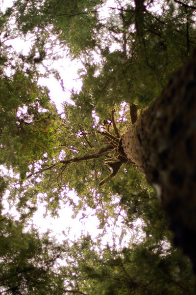 Trunk's Eye View, Heart o' the Hills Camp Ground Area, Olympic NP, WA<br /> <br /> I felt like I was entering a whole new world when I went into the rainforest of Olympic NP.