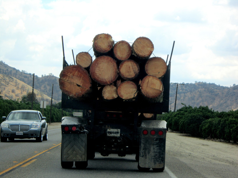 We saw this lumber truck as we left the forest.  It had a very large pine on it.