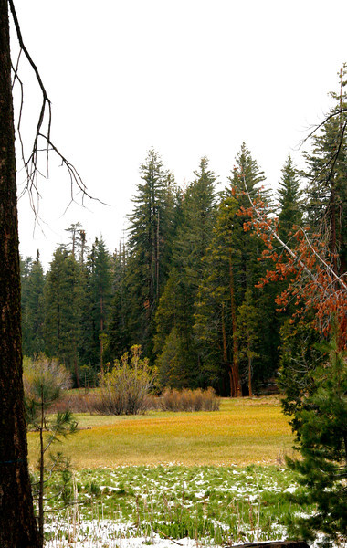 Rare meadows are too wet for the trees to grow in.