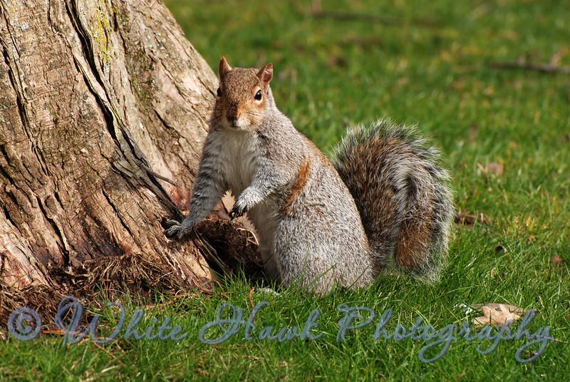 Squirrel Resting Against Tree