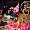 patches 2-year old birthday dog-0220