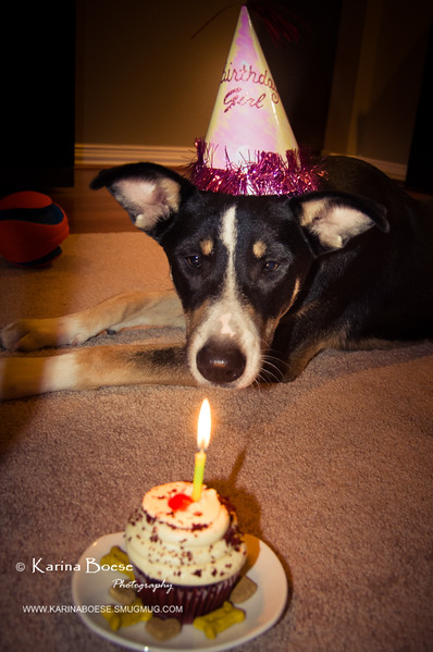 patches 1_year old birthday-2278