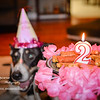 patches 2-year old birthday dog-0213