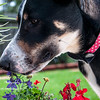 Patches smell the flower-3849