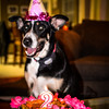 patches 2-year old birthday dog-0207