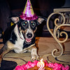patches 2-year old birthday dog-0218