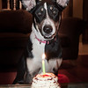 patches 1_year old birthday-2270