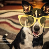 patches big glasses-2868