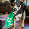 Dogs St Pat's Day-2214