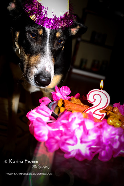 patches 2-year old birthday dog-0194