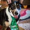 Dogs St Pat's Day-2183