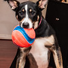 patches play ball-3646